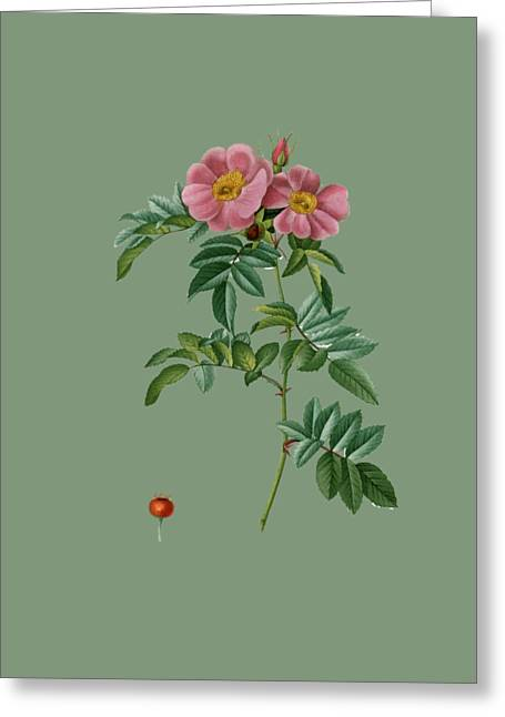 Bonnie Rose Art Greeting Cards - Rose16 Greeting Card by The one eyed Raven