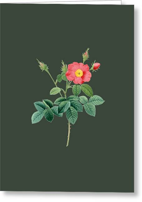 Bonnie Rose Art Greeting Cards - Rose19 Greeting Card by The one eyed Raven