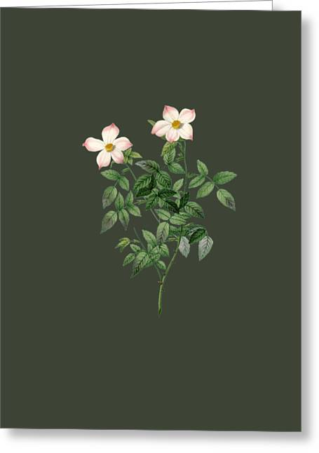 Bonnie Rose Art Greeting Cards - Rose20 Greeting Card by The one eyed Raven