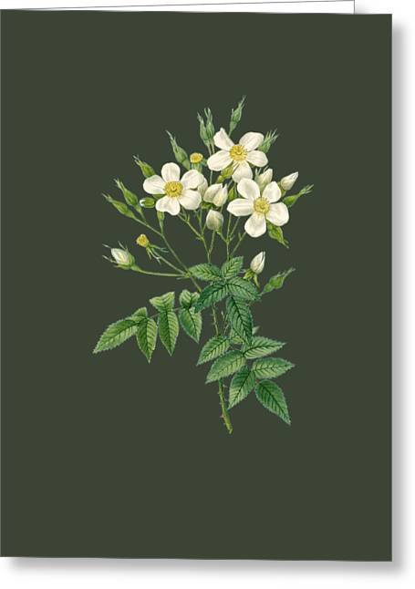 Bonnie Rose Art Greeting Cards - Rose5 Greeting Card by The one eyed Raven