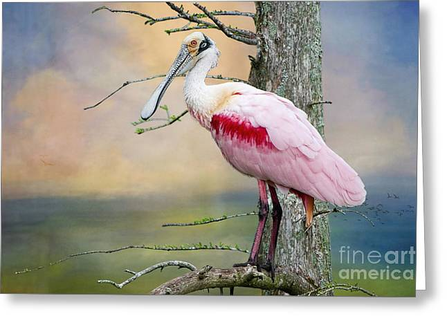 Spoonbill Greeting Cards - Roseate Spoonbill in Treetop Greeting Card by Bonnie Barry