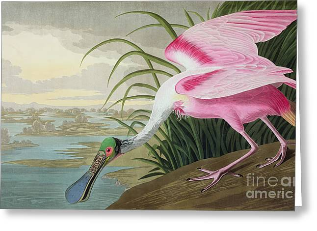 River. Clouds Greeting Cards - Roseate Spoonbill Greeting Card by John James Audubon