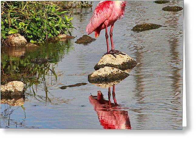 Tn Greeting Cards - Roseate Spoonbill reflections Greeting Card by TN Fairey
