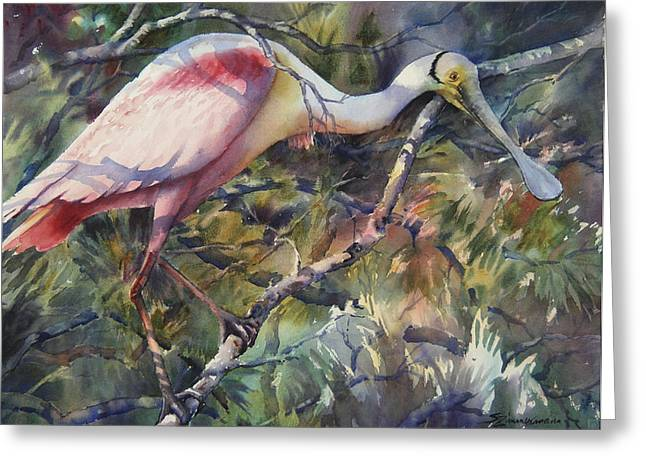 Wading Bird Greeting Cards - Roseate Spoonbill Greeting Card by Sue Zimmermann