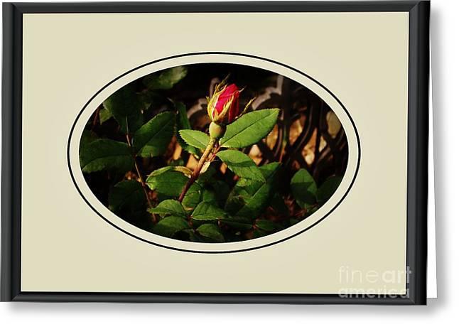 Floral Digital Art Digital Art Greeting Cards - Rosebud Greeting Card by Marsha Heiken