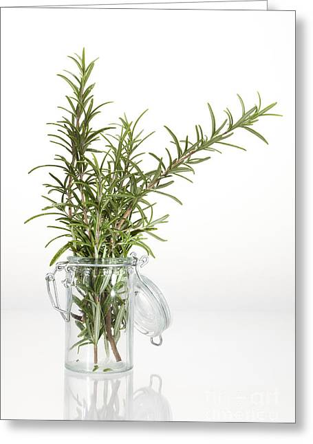 Flavorings Greeting Cards - Rosemary Greeting Card by Wolfgang Steiner