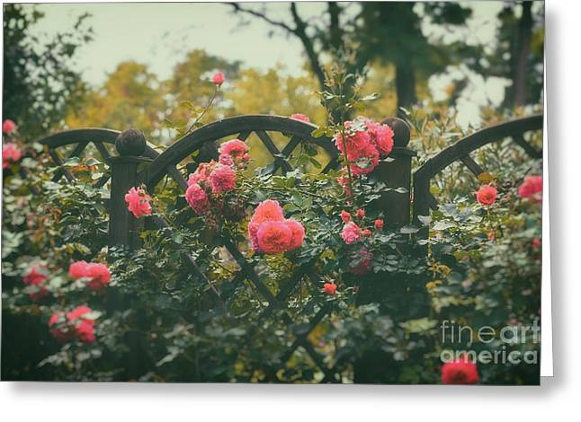 Rosen Garden Greeting Card by SK Pfphotography
