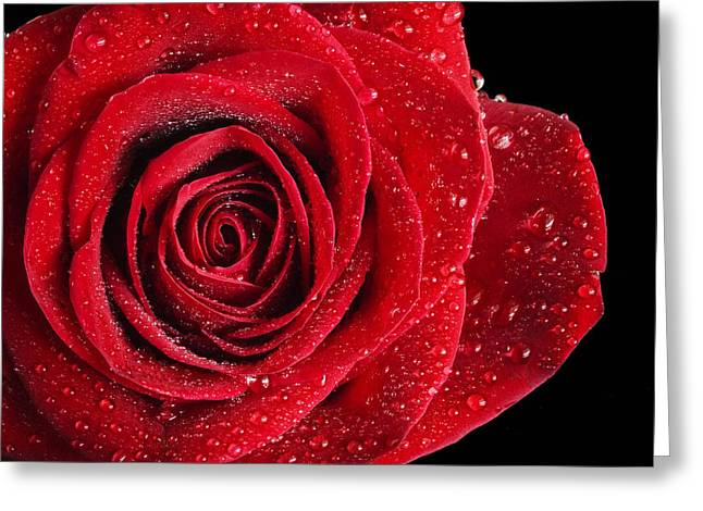 Dripping Rose Greeting Cards - Roses #4 Greeting Card by Robert Grauer