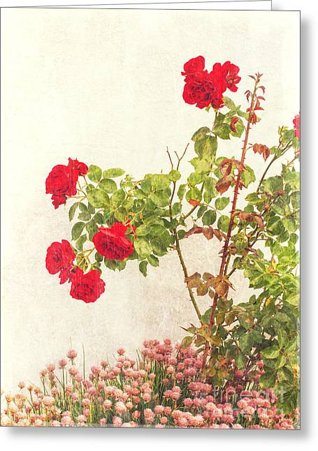 Rose Petals Greeting Cards - Roses And Clover Greeting Card by Melissa  Reese Peterson