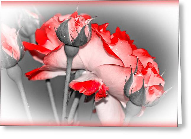 Subtle Colors Greeting Cards - Roses Are Red - Floral Greeting Card by Barry Jones