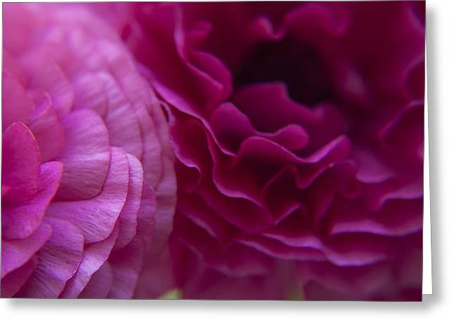 Close Up Greeting Cards - Roses Caressing Greeting Card by Jose Valeriano