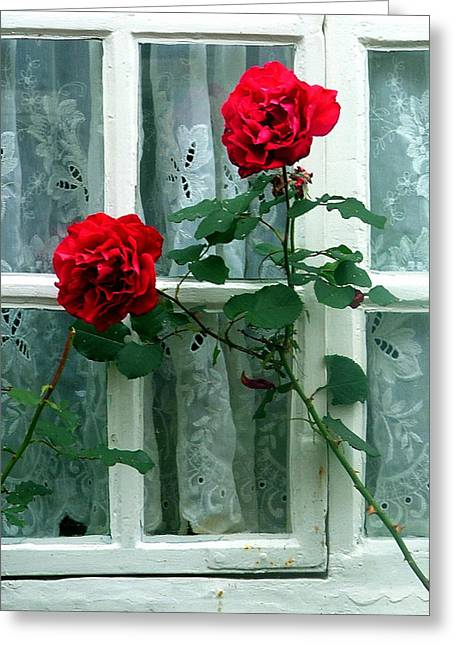 Rose Window Greeting Cards - Roses in the Window Greeting Card by Mindy Newman