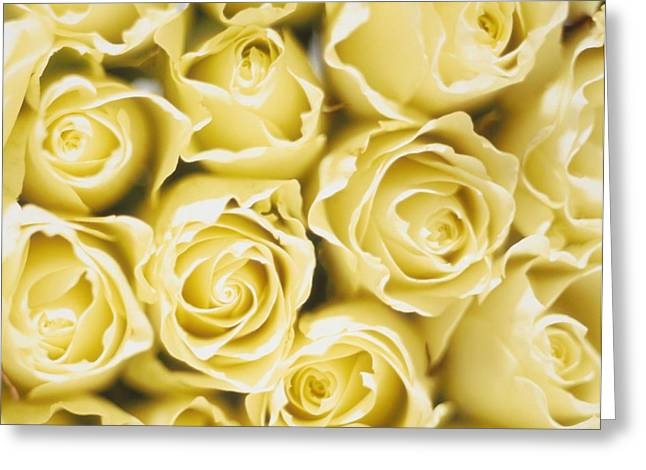 Back Lighting Greeting Cards - Roses Greeting Card by Sandro Sodano