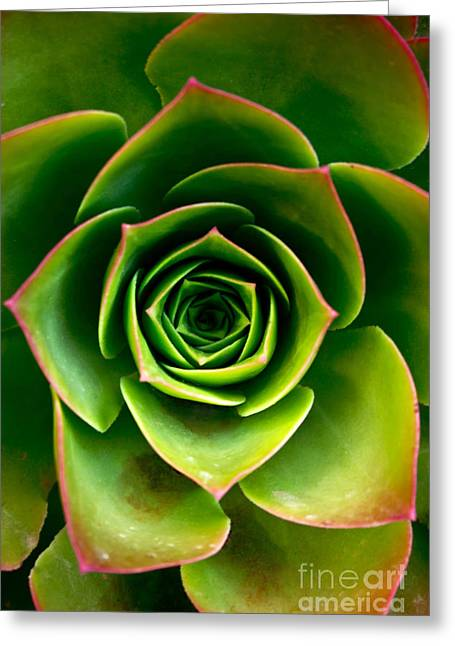 Close Focus Floral Greeting Cards - Rosette Greeting Card by Nadya Ost