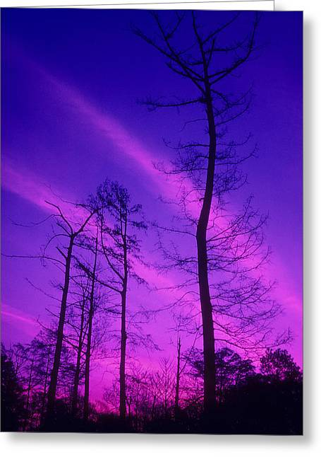 Winter Trees Greeting Cards - Rosy Fingers of Dawn Greeting Card by Gerard Fritz