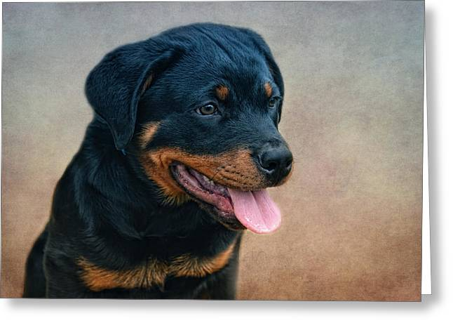 Puppies Photographs Greeting Cards - Rottweiler Puppy Greeting Card by Claudia Moeckel