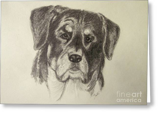 Working Dog Drawings Greeting Cards - Rottweiler Greeting Card by Suzette Kallen