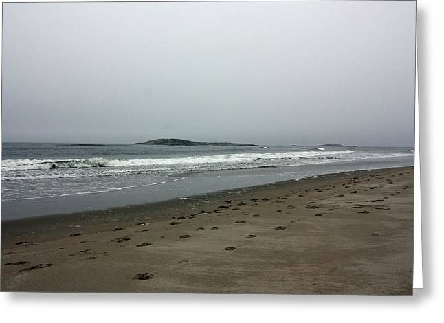 Maine Beach Greeting Cards - Rough Greeting Card by Becca Brann