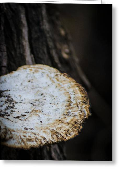 Round Fungi Greeting Cards - Rounded Greeting Card by Leslie Byrd