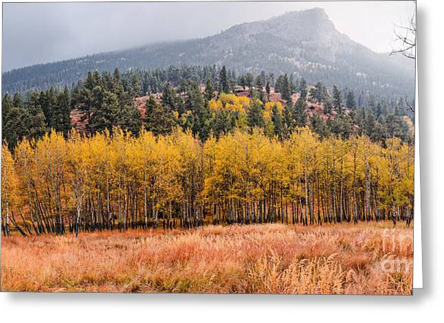 Row Of Aspens In The Fall River Valley - Fall Foliage In Estes Park Colorado Greeting Card by Silvio Ligutti