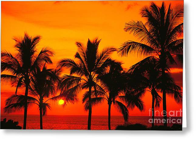 Row Of Palms Greeting Card by Bill Schildge - Printscapes