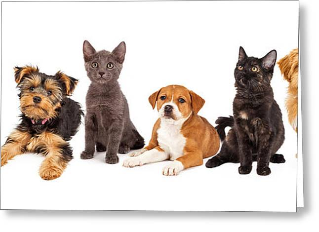 Little Puppy Greeting Cards - Row of Puppies and Kittens Greeting Card by Susan  Schmitz