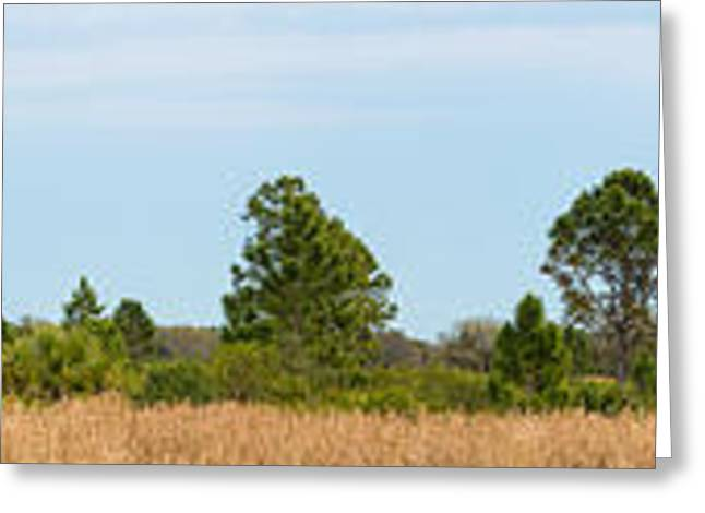 Row Of Trees In Sarasota, Florida, Usa Greeting Card by Panoramic Images