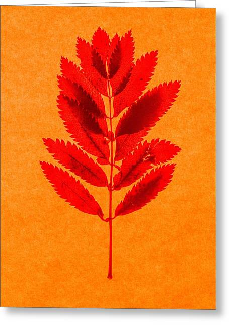 Fallen Leaf Greeting Cards - Rowan leaves Greeting Card by Graeme Harris