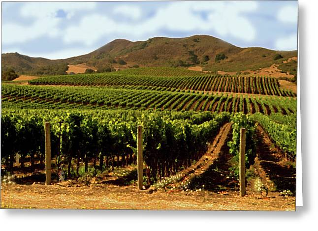 Grape Vines Greeting Cards - Rows Of Grape Vines Greeting Card by Gary Brandes