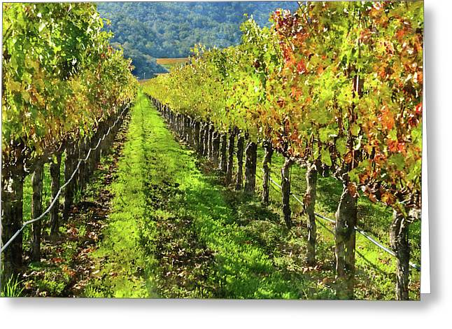 Rows Of Grapevines In Napa Valley Caliofnia Greeting Card by Brandon Bourdages