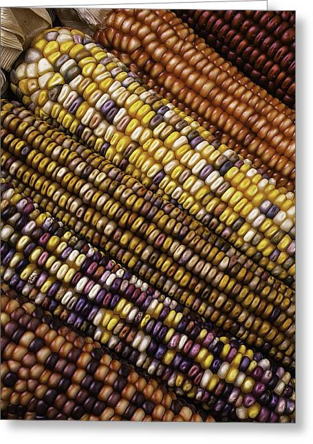 Ornamentation Greeting Cards - Rows Of Indian Corn Greeting Card by Garry Gay