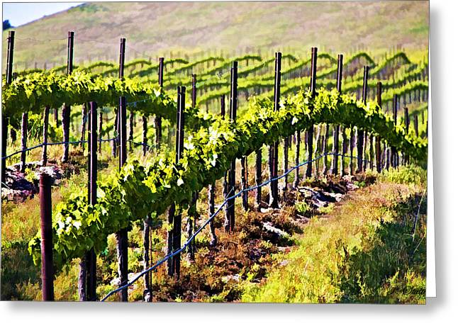 Grapevines Digital Art Greeting Cards - Rows of Vines Greeting Card by Patricia Stalter