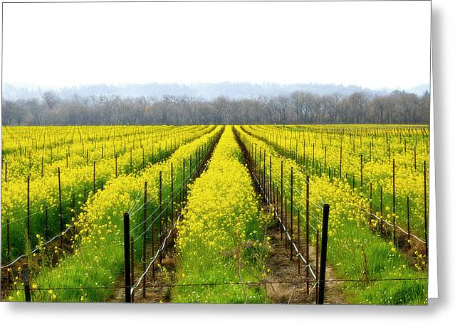 Rows Of Wild Mustard Greeting Card by Tom Reynen