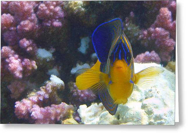 Angel Blues Greeting Cards - Royal Angelfish Closeup Greeting Card by Johanna Hurmerinta