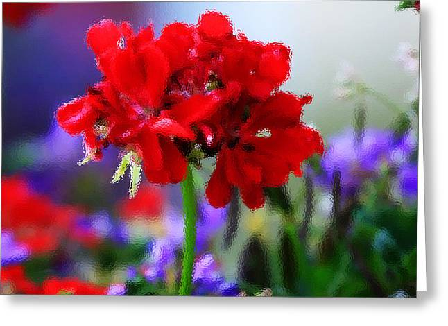 Red Geraniums Photographs Greeting Cards - Royal colors through the glass Greeting Card by Toni Hopper