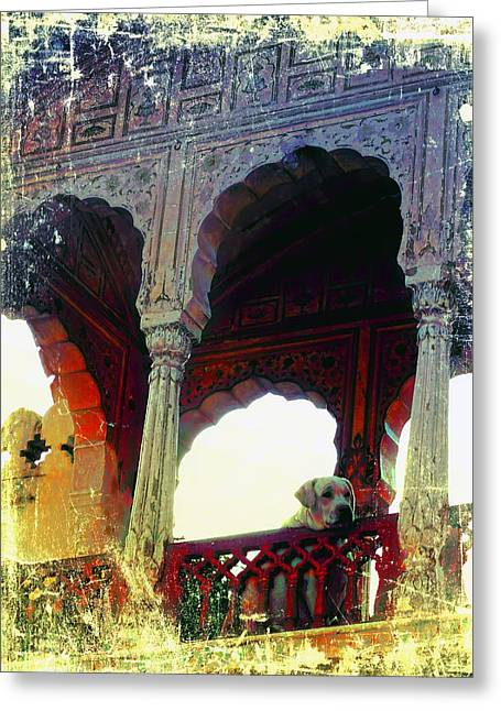 18th Century Greeting Cards - Royal Doggie Lonely at the Top Exotic Travel India 1a Greeting Card by Sue Jacobi