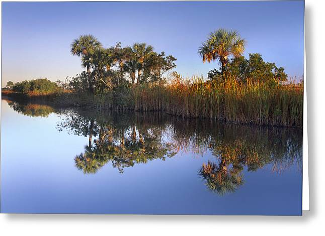 Regia Greeting Cards - Royal Palm Trees And Reeds Greeting Card by Tim Fitzharris