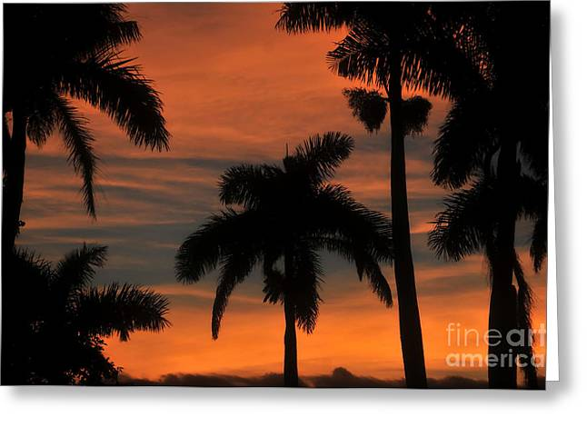 Royal Art Greeting Cards - Royal Palms Greeting Card by David Lee Thompson