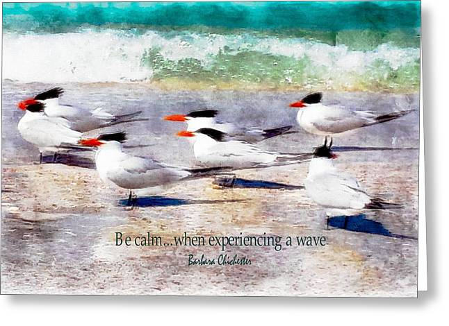 Tern Greeting Cards - Royal Tern Meditation Greeting Card by Barbara Chichester