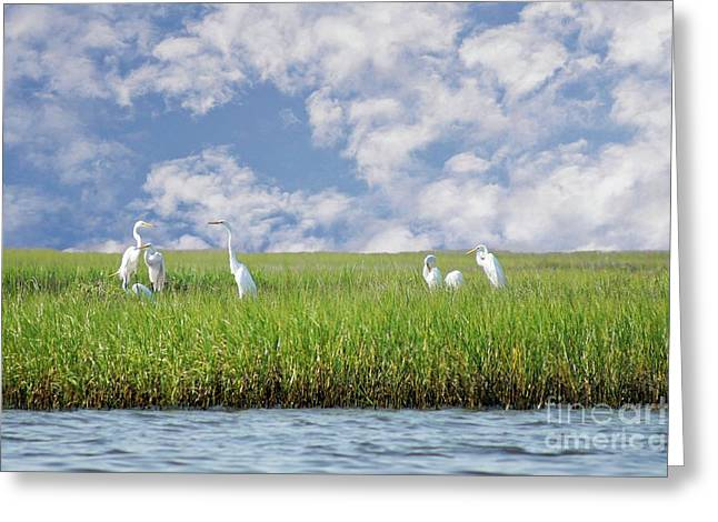 Water Fowl Greeting Cards - RSVP Egrets Only Greeting Card by Benanne Stiens
