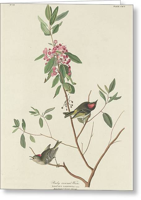 Naturalist Greeting Cards - Ruby-Crowned Wren Greeting Card by John James Audubon