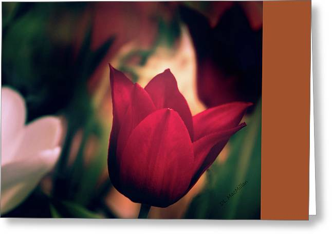Ruby Red Tulip Greeting Card by Donna Lee