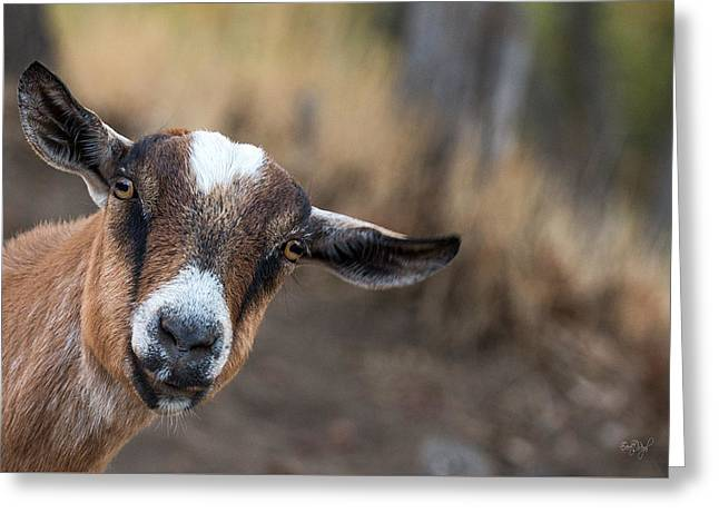 Ruby The Goat Greeting Card by Everet Regal