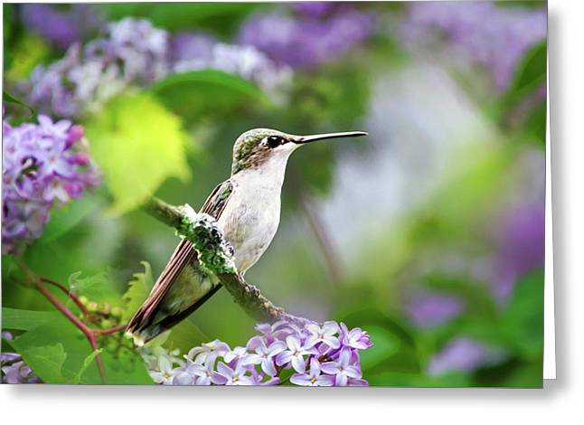Kolibri Greeting Cards - Ruby-Throated Hummingbird-1 Greeting Card by Christina Rollo