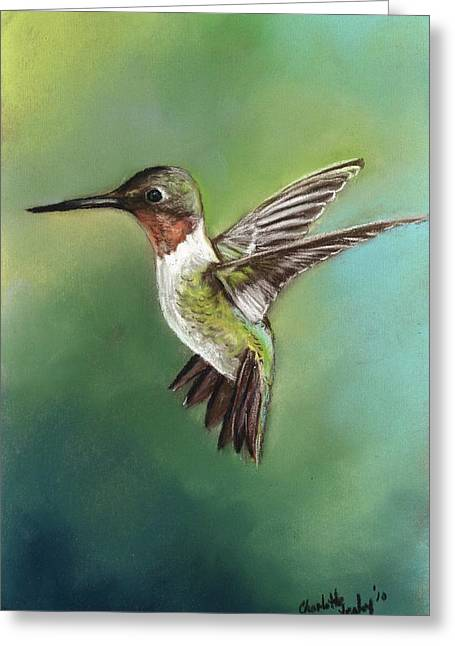 Ruby Throated Hummingbird Greeting Card by Charlotte Yealey