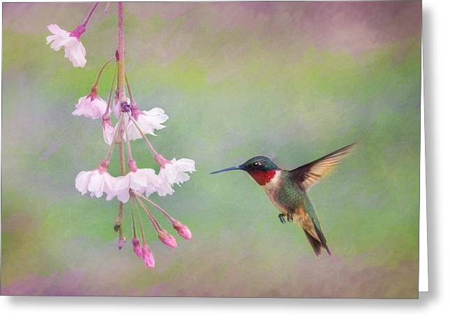 Weeping Mixed Media Greeting Cards - Ruby-Throated Hummingbird Greeting Card by Lori Deiter