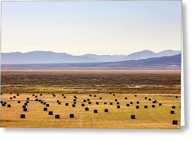 Ruby Valley Bales Greeting Card by Todd Klassy