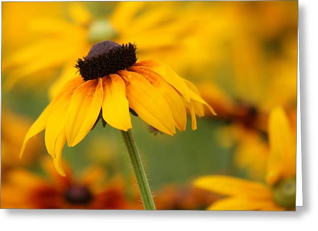Cloche Hat Greeting Cards - Rudbeckia in a Cloche Hat Greeting Card by Barbara  White