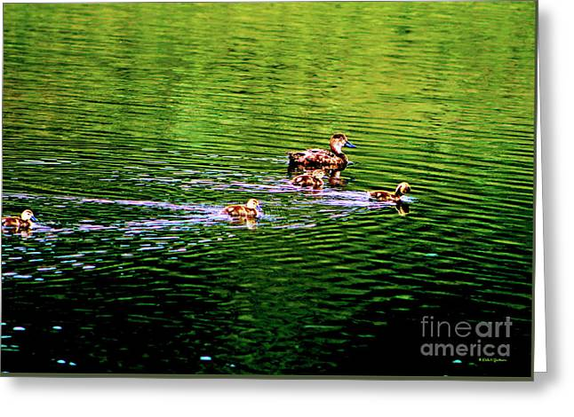 Water Fowl Greeting Cards - Ruddy Duck With Ducklings Greeting Card by Dale Jackson