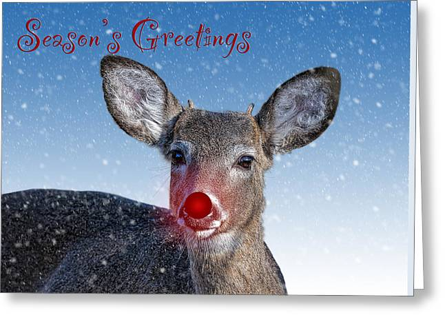 Rudolph Greeting Cards - Rudolph Seasons Greetings Card Greeting Card by Sharon Norman